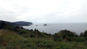 Plantas no fundo de Cliff Top Blowing With Ocean e da costa video estoque