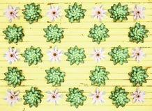 Plantas no fundo de madeira amarelo abstraia o fundo Imagem de Stock Royalty Free