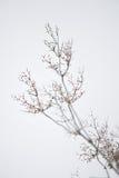 Plantas no inverno Imagens de Stock