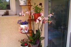 Plantas no jardim Imagens de Stock Royalty Free