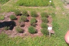 Plantas no jardim Imagens de Stock