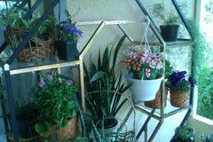 Plantas no jardim Fotos de Stock Royalty Free