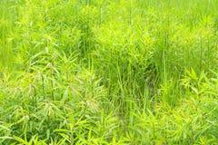 Plantas no parque Foto de Stock Royalty Free