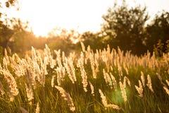 Plantas no por do sol Imagem de Stock Royalty Free