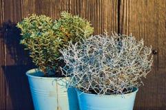 Plantas no potenciômetro foto de stock royalty free