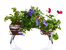 Plantas no potenciômetro fotografia de stock