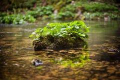 Plantas no rio Imagem de Stock