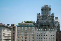Plantas no telhado dos arranha-céus de New York imagens de stock royalty free