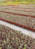 Plantas novas da exploração agrícola do jardim Fotos de Stock Royalty Free