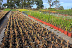 Plantas novas da exploração agrícola do jardim Foto de Stock