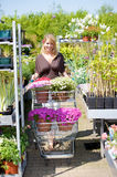 Plantas novas de compra Foto de Stock