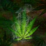 Plantas novas do cannabis ilustração royalty free