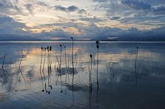 Plantas novas dos manguezais no mar durante o por do sol em torno da ilha Pamilacan Fotos de Stock Royalty Free