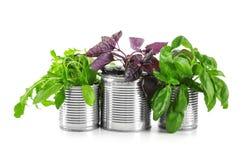 Plantas novas em umas latas de lata isoladas no branco fotografia de stock royalty free