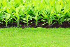 Plantas novas no jardim fotografia de stock royalty free