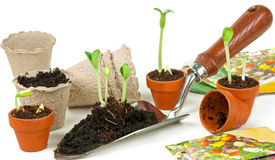 Plantas novas para o jardim Foto de Stock Royalty Free