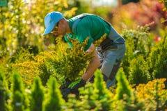 Plantas novas para o projeto do jardim Fotografia de Stock Royalty Free