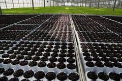 Plantas novas que crescem em uma planta muito grande Imagens de Stock Royalty Free