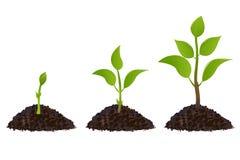 Plantas novas verdes Imagem de Stock