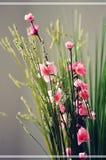 PLANTAS ORIENTAIS Imagem de Stock Royalty Free