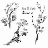 Plantas orientales del vector: rama del pino, cereza, Sakura, mano dibujada Imagen de archivo libre de regalías