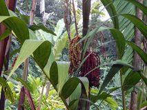 Plantas originais na ilha grande de Havaí Fotos de Stock
