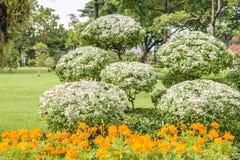 Plantas ornamentales, árboles enanos en el parque Fotografía de archivo