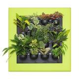 Plantas ornamentales Imagen de archivo libre de regalías