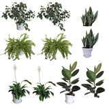 Plantas ornamentales Imágenes de archivo libres de regalías