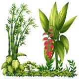 Plantas ornamentales ilustración del vector