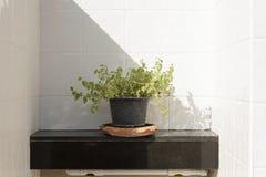 Plantas ornamentales imagenes de archivo