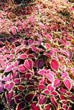 Plantas ornamentales. Imagenes de archivo