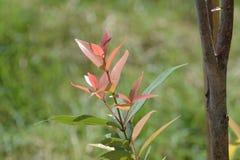 Plantas ornamentales Imagen de archivo