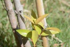 Plantas ornamentales Fotografía de archivo libre de regalías