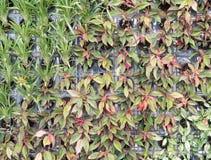 Plantas ornamentales coloridas en el jardín vertical Imagen de archivo libre de regalías
