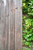 Plantas ornamentales de madera y verdes, hiedra verde Espacio para el texto o la imagen Textura del fondo natural Fotografía de archivo