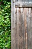 Plantas ornamentales de madera y verdes, hiedra verde Espacio para el texto o la imagen Textura del fondo natural Foto de archivo
