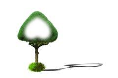Plantas ornamentales del corazón del verde del árbol de pino Foto de archivo