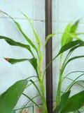 Plantas ornamentales en el cuarto de baño imagenes de archivo