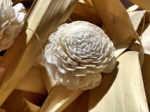 Plantas ornamentales en la alameda Imagenes de archivo