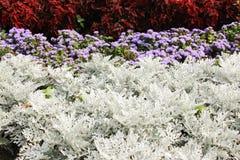 Plantas ornamentales en macizos de flores Imagen de archivo