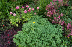 Plantas ornamentales y flores Imagen de archivo libre de regalías