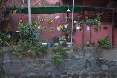 Plantas ornamentales y flores en potes Fotos de archivo libres de regalías
