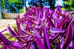 Plantas púrpuras Imagen de archivo