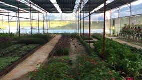 Plantas para el lactante en el invernadero en Dalat almacen de video