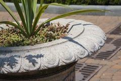 Plantas para jardinar com foco macio Fotos de Stock Royalty Free