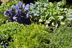 Plantas para la venta Foto de archivo libre de regalías