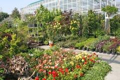 Plantas para la venta en el departamento Imagenes de archivo