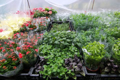 Plantas para la venta en el mercado Imagen de archivo libre de regalías
