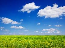 Plantas para o combustível biológico Imagens de Stock